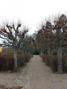 Botanical Garden in Uppsala Castle